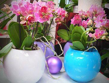 Noleggio piante roma per stand congressi fiere meeting aziende for Vasi per orchidee ikea