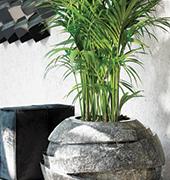 Vivaio roma comandini garden for Vendita piante ornamentali